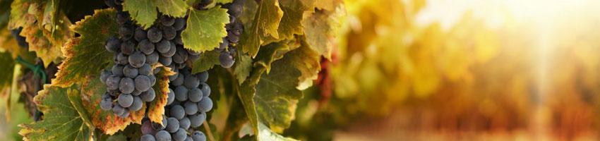enologia e mercati vitivinicoli
